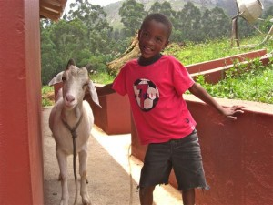 Beauty the goat and Sibusiso