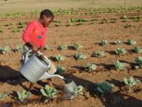 Girl watering garden