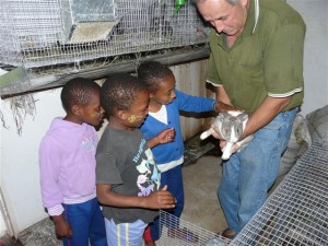Raising Rabbitts